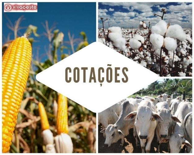 Acompanhe em tempo real a cotação dos principais produtos agrícolas